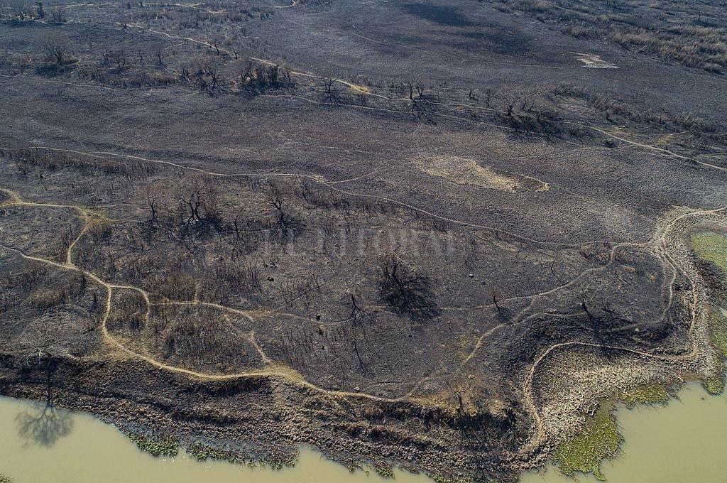 Las zonas descampadas y ribereñas del área metropolitana en el 2020 fueron arrasadas por el fuego. Esta postal, por ahora, en el 2021 es solo un espejismo. Crédito: Fernando Nicola / Archivo