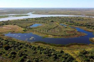 La restauración de ecosistemas, clave   para ambientes saludables y funcionales