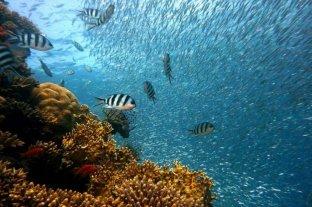 """Día Mundial de los Océanos: """"El océano: vida y medios de subsistencia"""""""