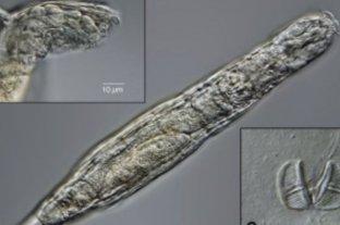 Reviven animal congelado por 24 mil años en Siberia