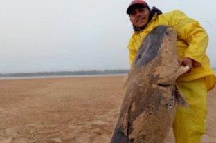 Polémica por la captura de un enorme surubí en Corrientes
