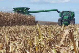 La soja y el maíz cerraron con subas en Rosario
