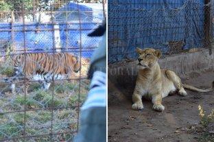 Rescataron 6 ejemplares de especies amenazadas en Santa Fe