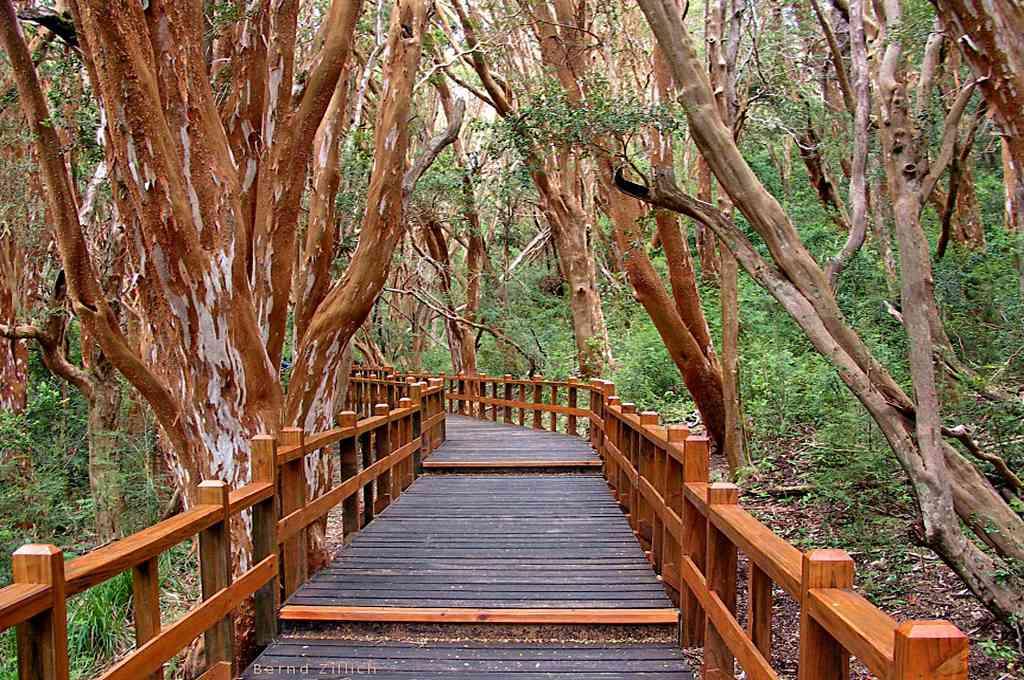 Parque nacional Los Arrayanes, Neuquén. Crédito: Imagen ilustrativa