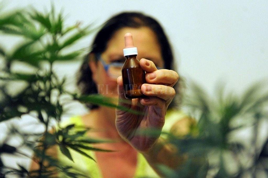 El aceite de cannabis medicinal santafesino estará listo en agosto y el próximo paso es exportar -  -
