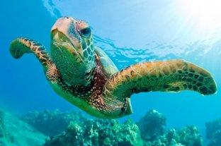 Tortugas Marinas: especie en peligro