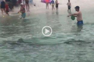 Video: tiburones martillo nadaron entre personas en la costa de una playa