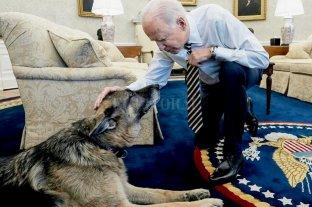 Biden despidió por Twitter a su mascota, un pastor alemán que murió a los 13 años