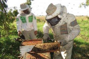 Amargo día del apicultor