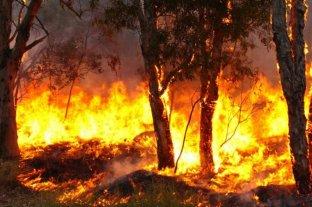 Permanecen activos dos focos de incendios forestales en Entre Ríos