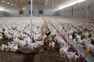 Más consumo y sostenida producción de carne aviar