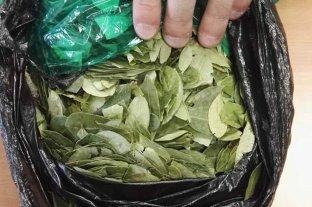 Narcotráfico: se registró un importante descenso de cultivos de hoja de coca en Colombia