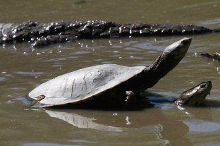 Insólito: quisieron robar una tortuga  de la granja La Esmeralda