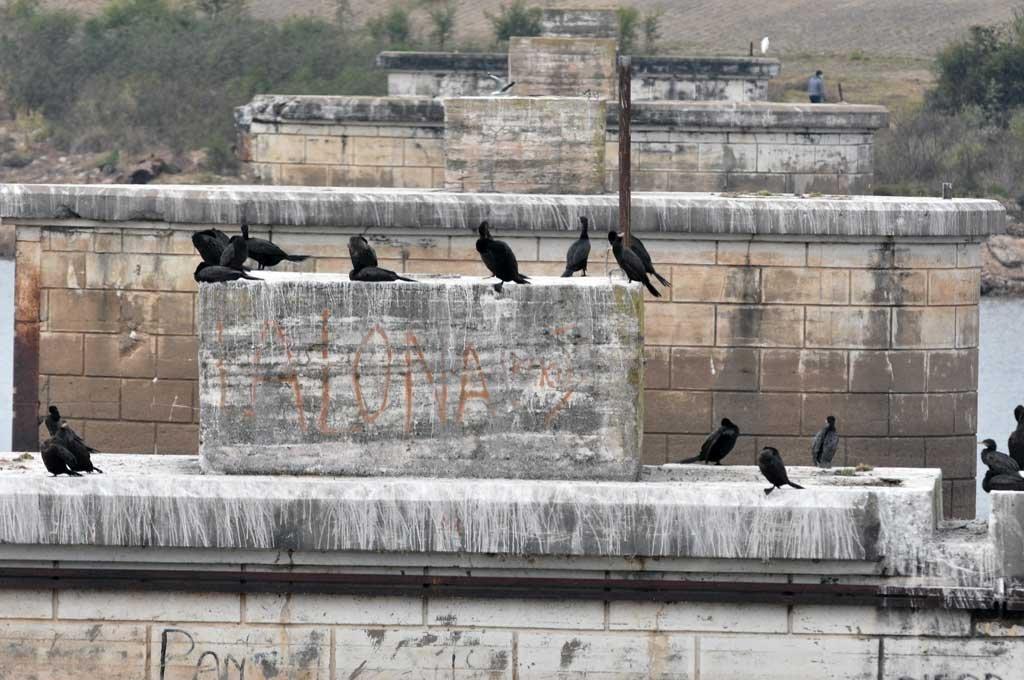 Biguás. Las aves de plumaje negro coparon los pilotes que se usaban para la aerosilla.  Crédito: Guillermo Di Salvatore