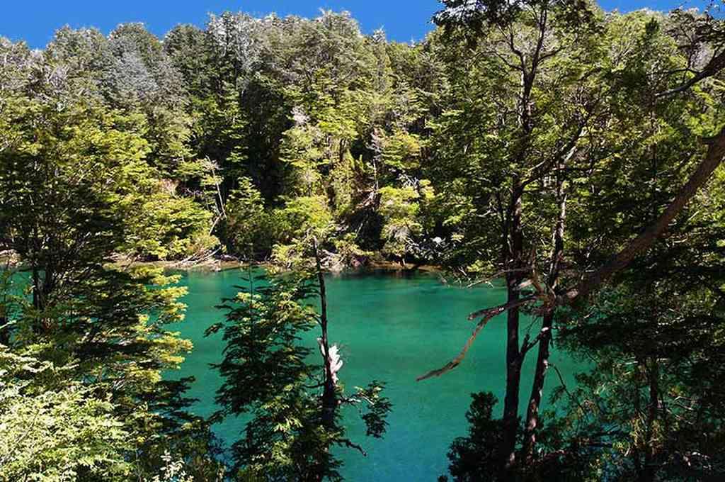 Parque Nacional Los Alerces. Crédito: Imagen ilustrativa