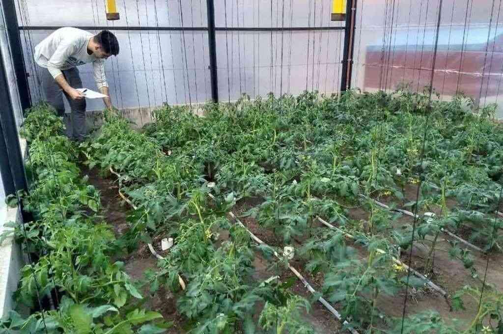 Franco Rossi tiene 21 años, ya vendió sus semillas a 15 provincias de distintos puntos del país y creó un tipo de tomate que lleva su sello. Crédito: Sur24