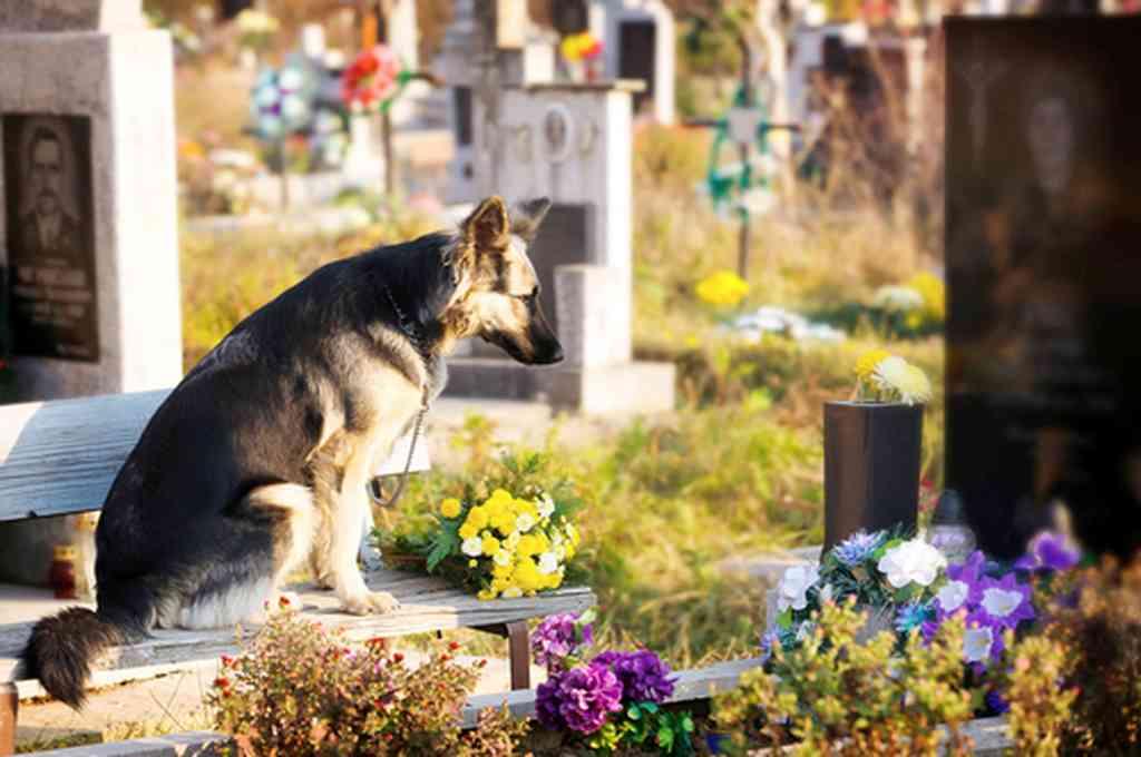 En la imagen se observa Capitán, el perro cordobés que vivió junto a la tumba de su dueño por más de 10 años. Crédito: Imagen ilustrativa