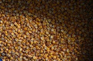 Subas para el maíz en Rosario