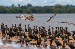 Corrientes celebró la creación del nuevo parque provincial Apipé Grande