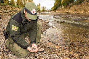 Almeja tóxica: fallido experimento medioambiental