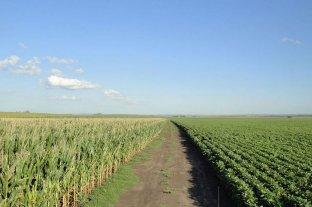 Soja o maíz: esa es hoy la cuestión