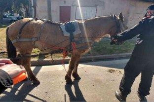 Rescatan yegua preñada y un caballo en mal estado