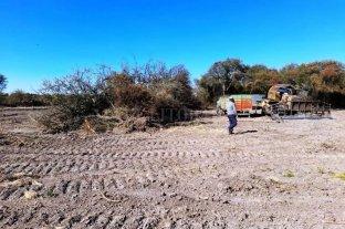 Operativos por desmonte y transporte ilegal de leña