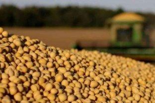 El precio de la soja sufre la peor caída en un mes
