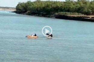 Video: un caballo cruzó caminando el río Paraná