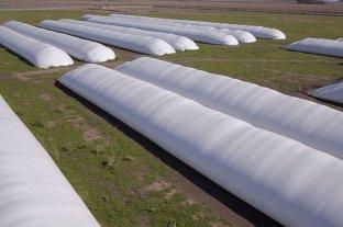 Argentina exportará a Pakistán tecnología para almacenar granos