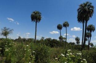 Crearán un nuevo parque nacional en Entre Ríos