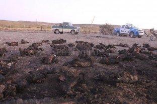 Neuquén: detenido por matar e incinerar 62 chivas de su vecino