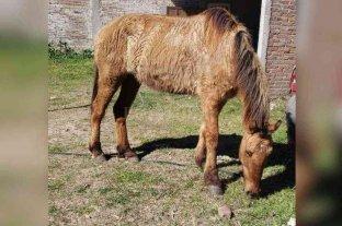 Disputa legal por una mula manca y una yegua tuerta