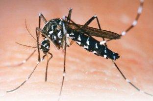 Por qué no se vacuna a la población contra el Dengue