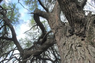 En el Día del Árbol, su importancia y preservación es reponsabilidad de todos