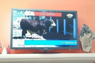 No apto para cardíacos: así compró un toro Braford desde su casa por casi $ 9 millones