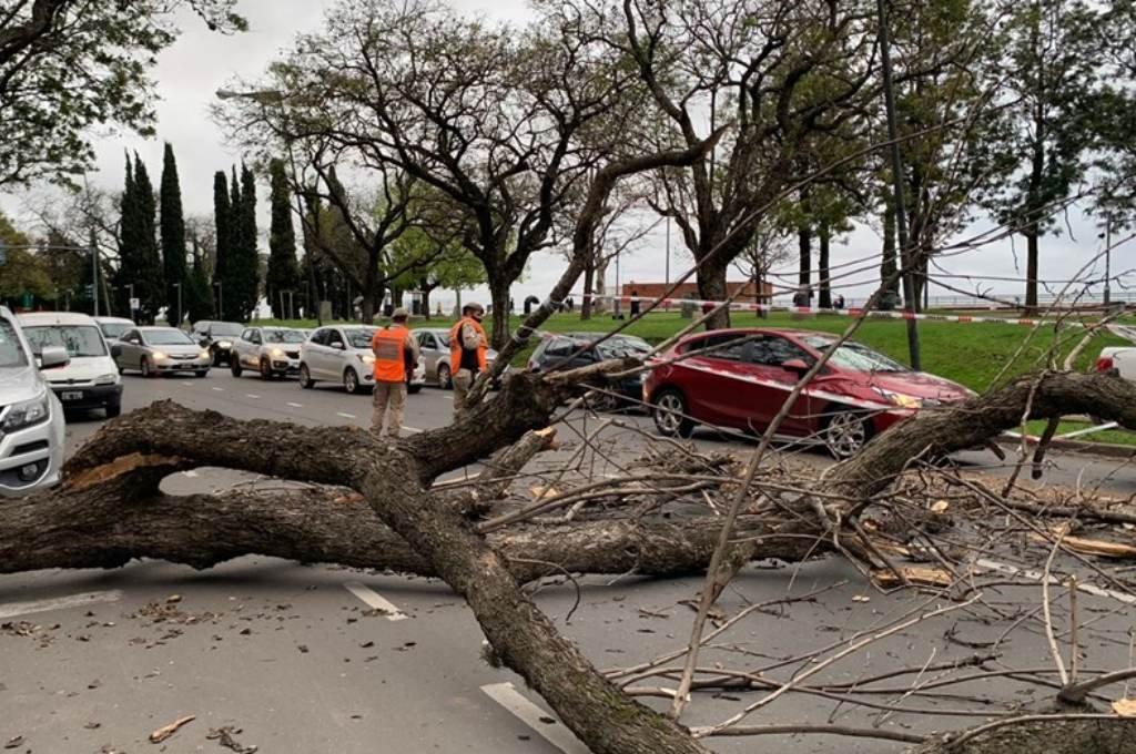 Un árbol cayó en la zona del Parque España y generó congestión en el tránsito. Crédito: Gentileza