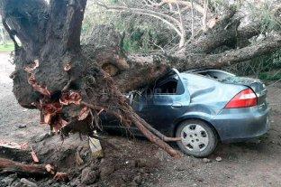 Un árbol aplastó un auto en Santo Tomé y dejó un hombre lesionado