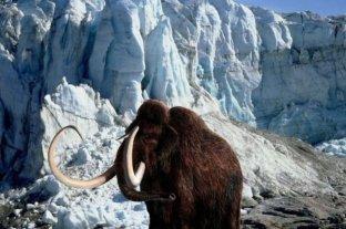 Buscan resucitar al mamut lanudo con un híbrido de elefante