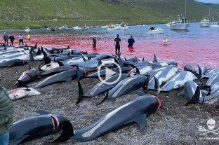 Video: mataron más de 1.400 delfines en una caza