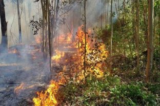 Se registra un solo foco de incendio forestal activo en la localidad de Victoria