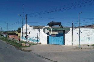 El secreto del toro de Blas Parera, un ícono del norte de la ciudad de Santa Fe