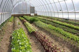 Empleo Verde: Rafaela busca potenciar la producción local de alimentos