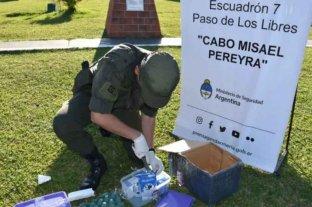 Corrientes: descubrieron marihuana dentro de cinco cartones de leche