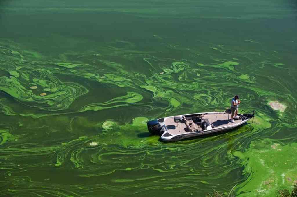 La presencia de algas y de bacterias es algo normal en estos entornos, pero a veces un elevado número y agota el oxígeno del agua y crea zonas muertas. Crédito: Imagen ilustrativa