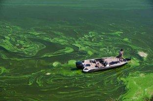 Las extinciones masivas están convirtiendo el agua dulce en tóxica