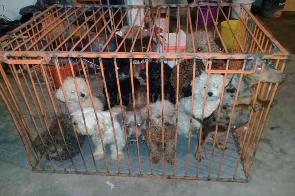 De los 95 animales, 70 son perros. Hay dos hembras preñadas y varios cachorros. Crédito: El Litoral