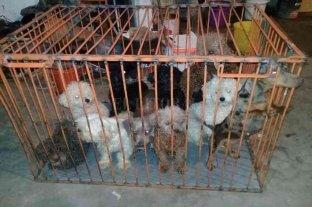 Libertad y domiciliaria para madre e hija  imputadas por extorsión y maltrato animal