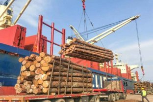 Exportan 34 mil toneladas de madera de pino de Entre Ríos hacia la India