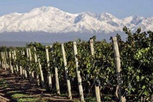 Un establecimiento del Valle de Uco fue elegido la mejor bodega y mejor viñedo del mundo por tercera vez consecutiva